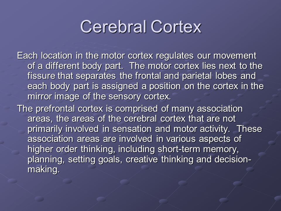 Cerebral Cortex Each location in the motor cortex regulates our movement of a different body part.