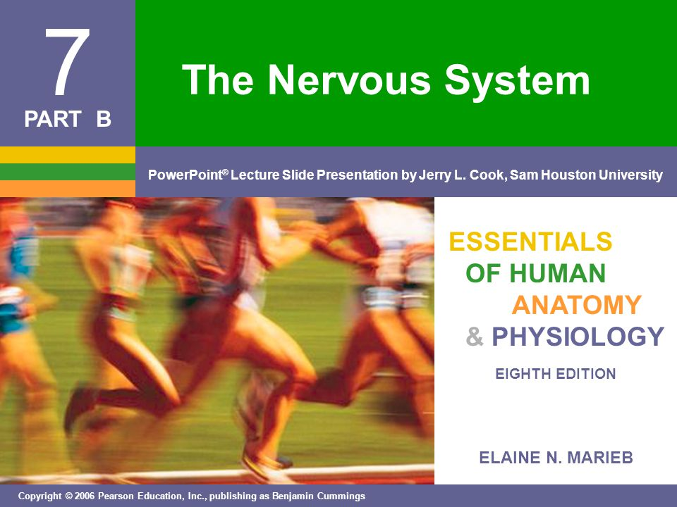 ELAINE N. MARIEB EIGHTH EDITION 7 Copyright © 2006 Pearson Education, Inc., publishing as Benjamin Cummings PowerPoint ® Lecture Slide Presentation by