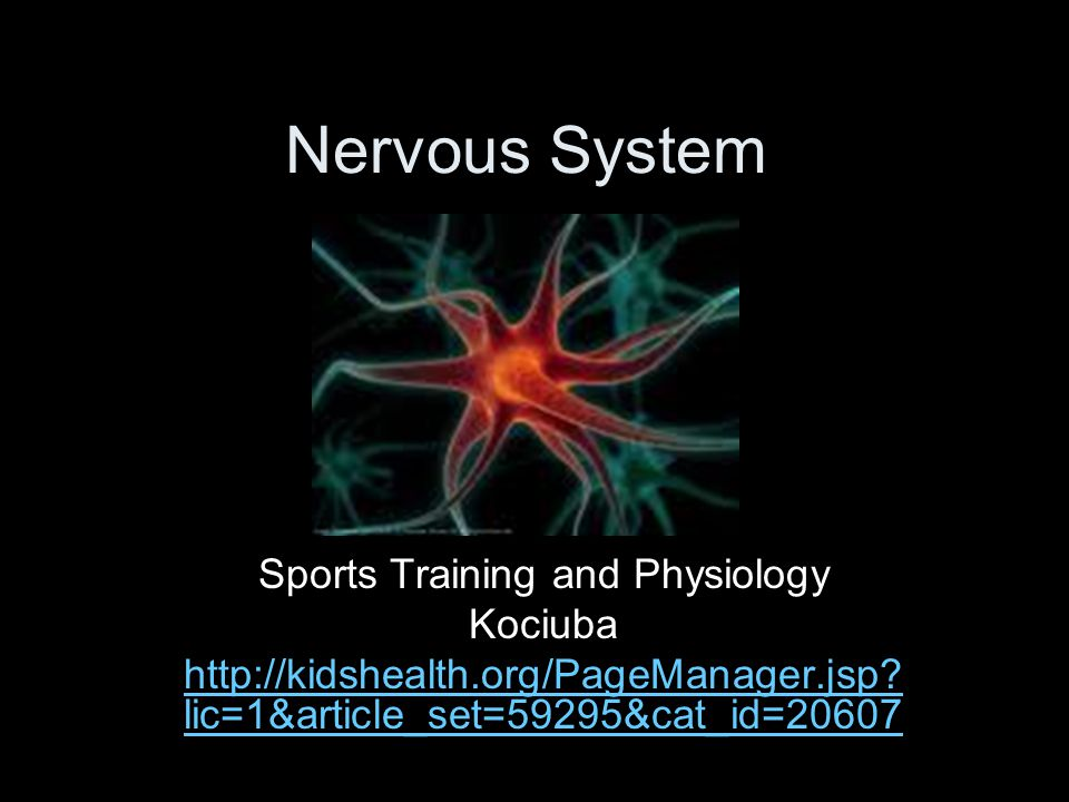 Nervous System Sports Training and Physiology Kociuba http://kidshealth.org/PageManager.jsp.