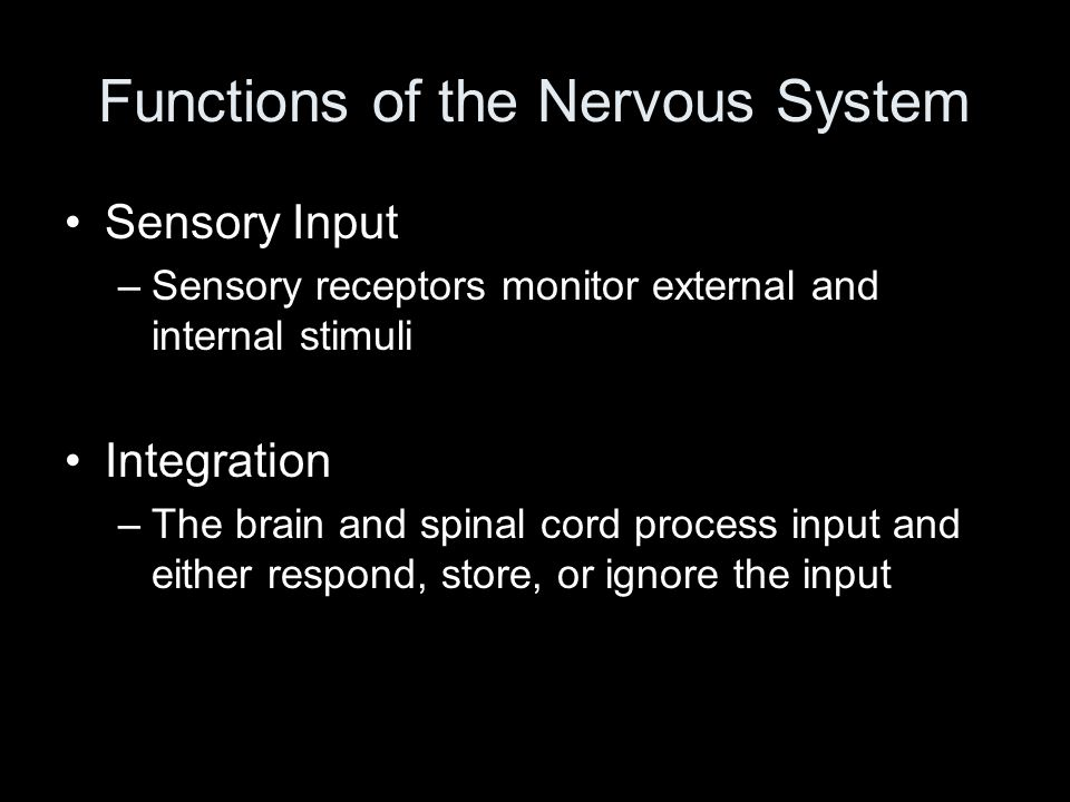 Functions of the Nervous System Sensory Input –Sensory receptors monitor external and internal stimuli Integration –The brain and spinal cord process input and either respond, store, or ignore the input