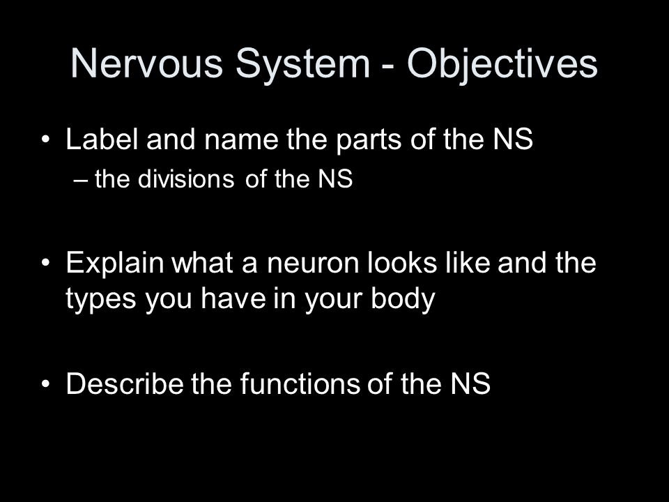 NS and the Digestive System Regulates secretion from the digestive glands Regulates secretion from the digestive organs Controls the mixing and movement of the digestive tract