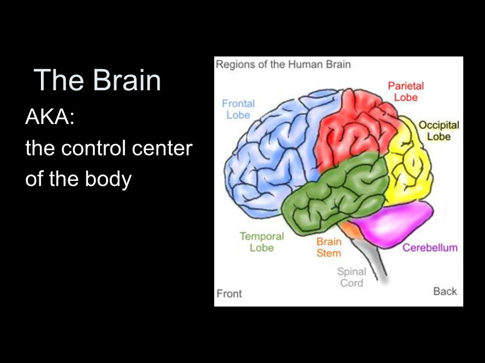 The Brain AKA: the control center of the body