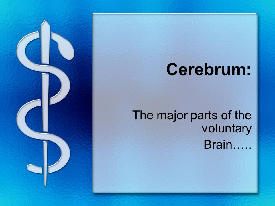 Cerebrum: The major parts of the voluntary Brain…..