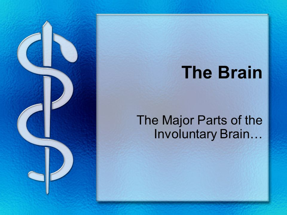 The Brain The Major Parts of the Involuntary Brain…