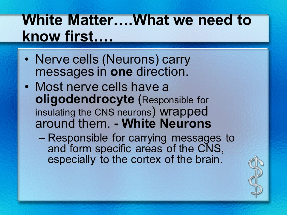 White Matter….What we need to know first…. Nerve cells (Neurons) carry messages in one direction. Most nerve cells have a oligodendrocyte ( Responsibl