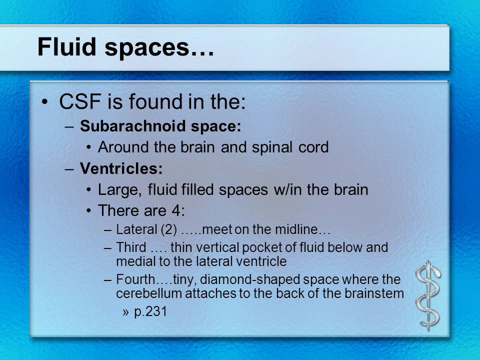Fluid spaces… CSF is found in the: –Subarachnoid space: Around the brain and spinal cord –Ventricles: Large, fluid filled spaces w/in the brain There