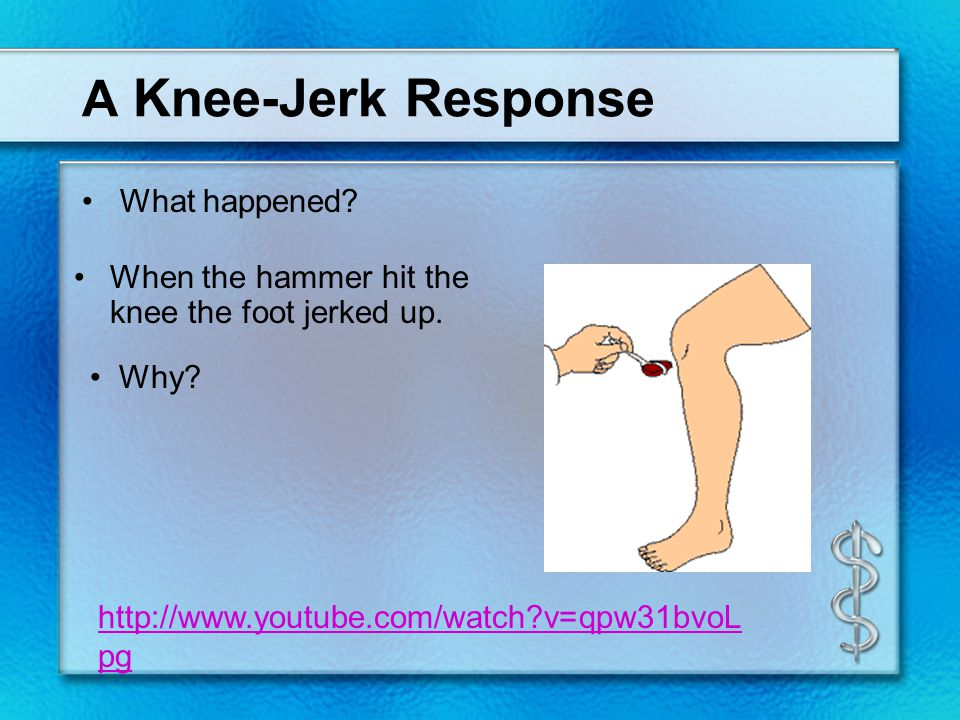 A Knee-Jerk Response What happened? Why? When the hammer hit the knee the foot jerked up. http://www.youtube.com/watch?v=qpw31bvoL pg