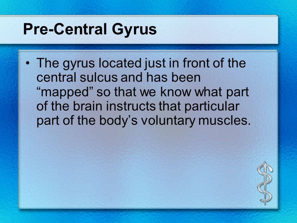 """Pre-Central Gyrus The gyrus located just in front of the central sulcus and has been """"mapped"""" so that we know what part of the brain instructs that pa"""