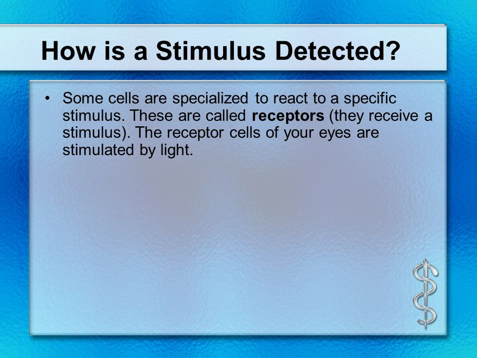 How is a Stimulus Detected? Some cells are specialized to react to a specific stimulus. These are called receptors (they receive a stimulus). The rece
