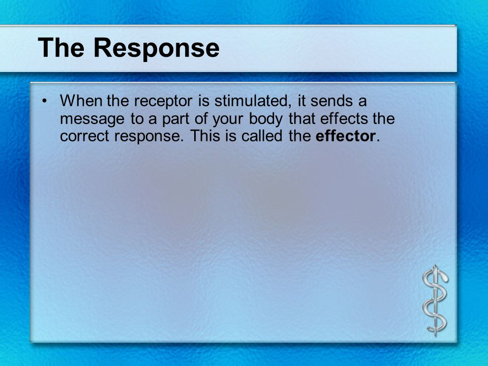 The Response When the receptor is stimulated, it sends a message to a part of your body that effects the correct response.