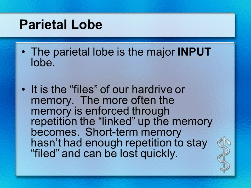 """Parietal Lobe The parietal lobe is the major INPUT lobe. It is the """"files"""" of our hardrive or memory. The more often the memory is enforced through re"""