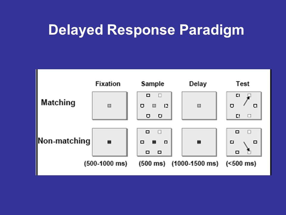 Delayed Response Paradigm
