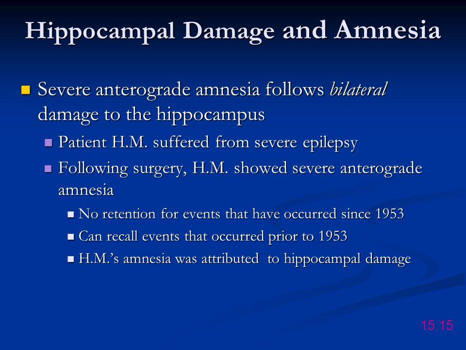 Hippocampal Damage and Amnesia Severe anterograde amnesia follows bilateral damage to the hippocampus Severe anterograde amnesia follows bilateral damage to the hippocampus Patient H.M.