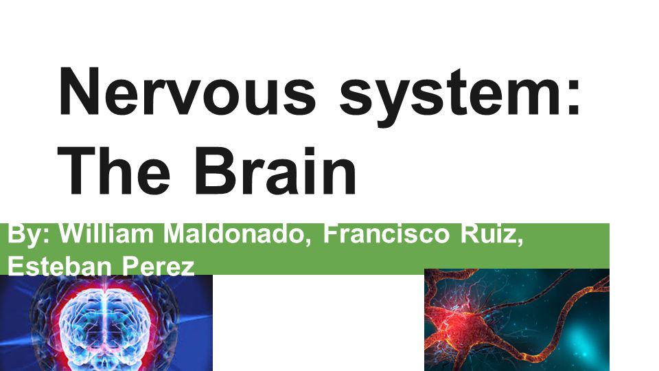 Nervous system: The Brain By: William Maldonado, Francisco Ruiz, Esteban Perez