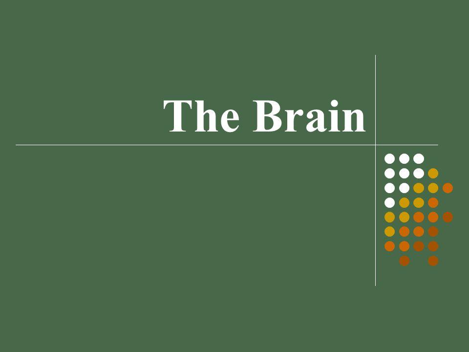 The Brain Module 08