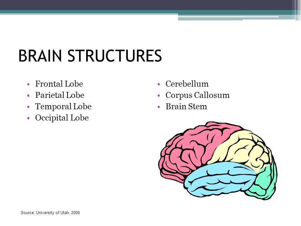 BRAIN STRUCTURES Frontal Lobe Parietal Lobe Temporal Lobe Occipital Lobe Cerebellum Corpus Callosum Brain Stem Source: University of Utah, 2006