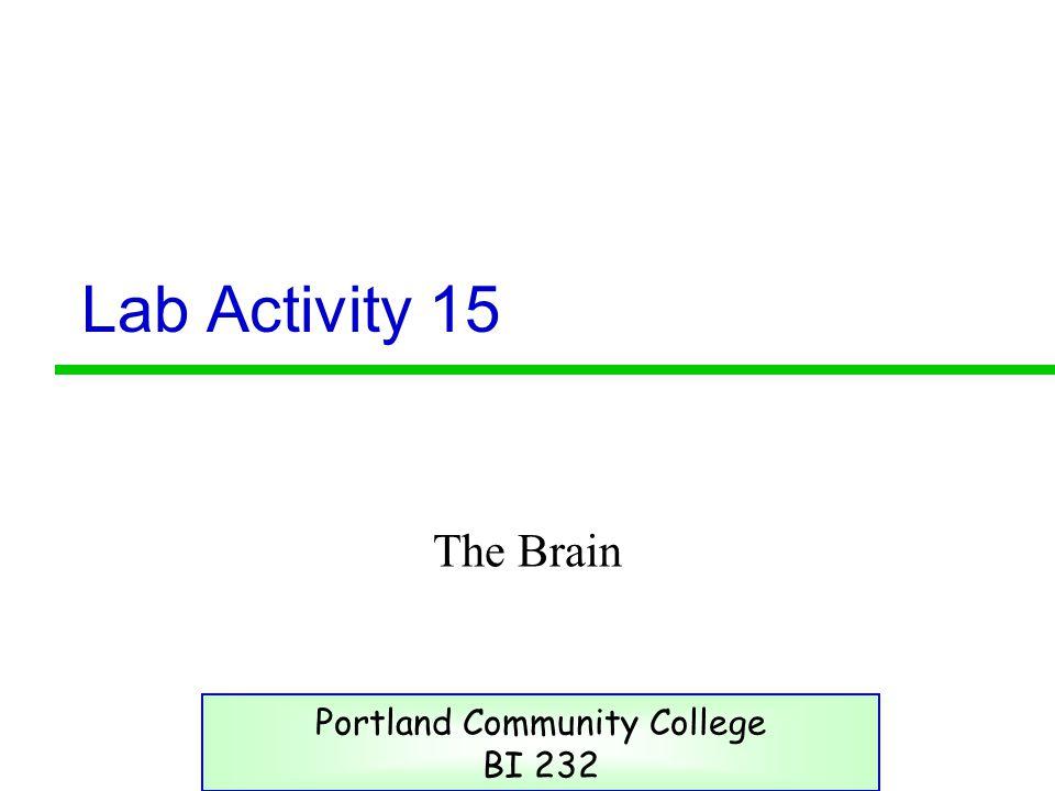 Lab Activity 15 The Brain Portland Community College BI 232