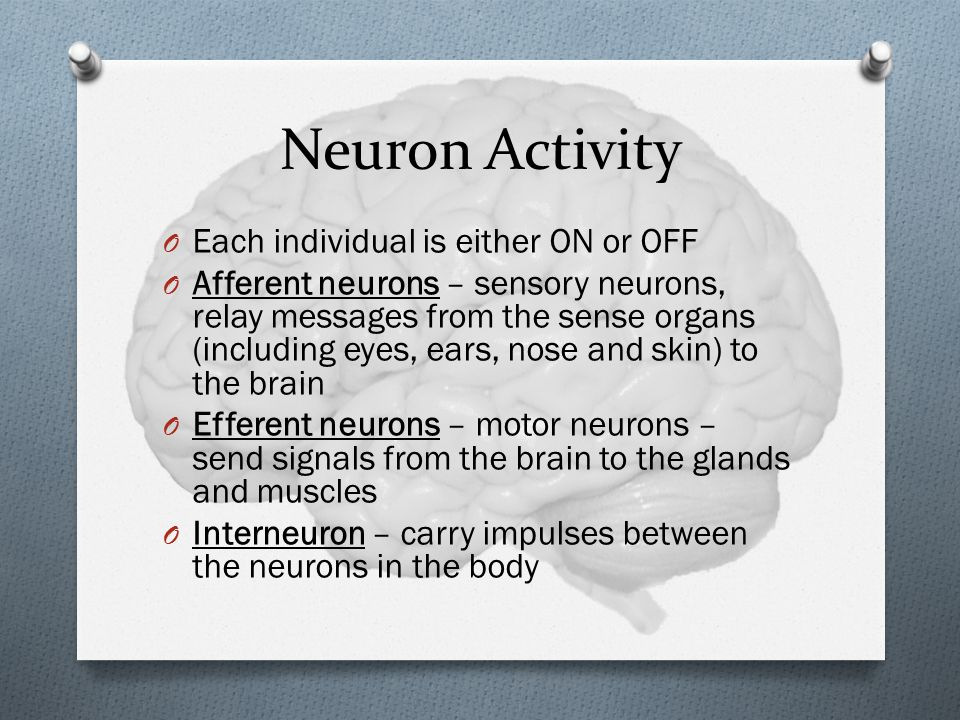 Neuron Activity O Each individual is either ON or OFF O Afferent neurons – sensory neurons, relay messages from the sense organs (including eyes, ears, nose and skin) to the brain O Efferent neurons – motor neurons – send signals from the brain to the glands and muscles O Interneuron – carry impulses between the neurons in the body