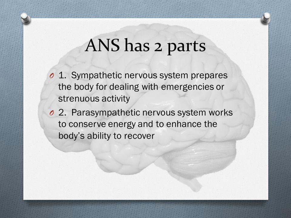 ANS has 2 parts O 1.