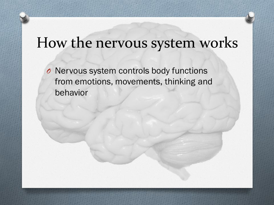 How the nervous system works O Nervous system controls body functions from emotions, movements, thinking and behavior