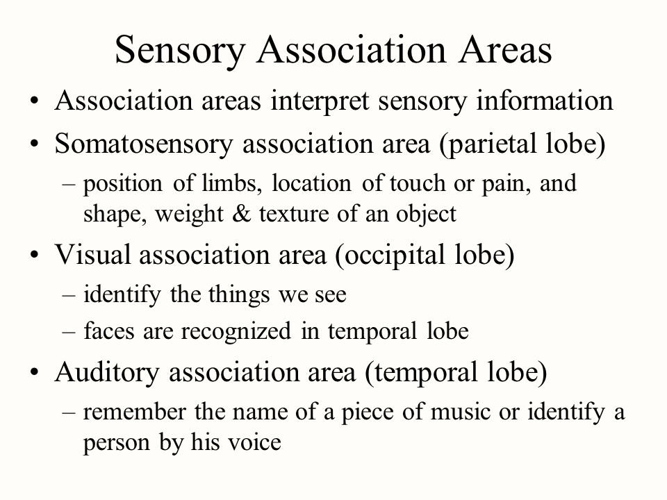 Sensory Association Areas Association areas interpret sensory information Somatosensory association area (parietal lobe) –position of limbs, location of touch or pain, and shape, weight & texture of an object Visual association area (occipital lobe) –identify the things we see –faces are recognized in temporal lobe Auditory association area (temporal lobe) –remember the name of a piece of music or identify a person by his voice
