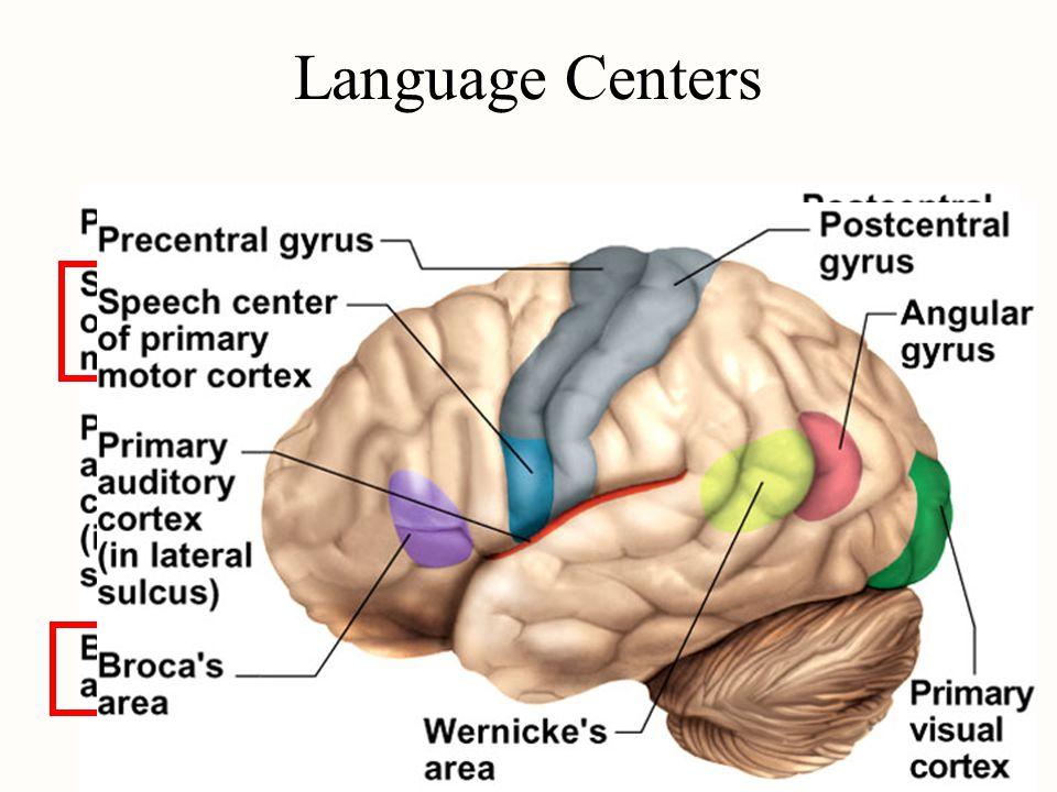 Language Centers
