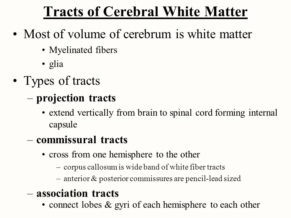 Tracts of Cerebral White Matter Most of volume of cerebrum is white matter Myelinated fibers glia Types of tracts –projection tracts extend vertically