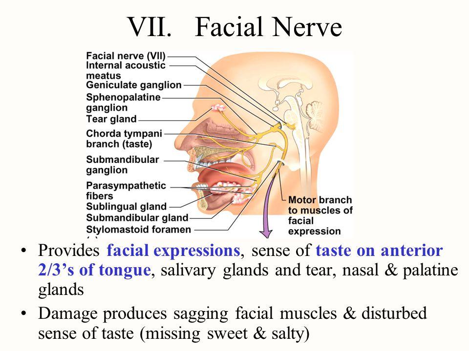 VII. Facial Nerve Provides facial expressions, sense of taste on anterior 2/3's of tongue, salivary glands and tear, nasal & palatine glands Damage pr