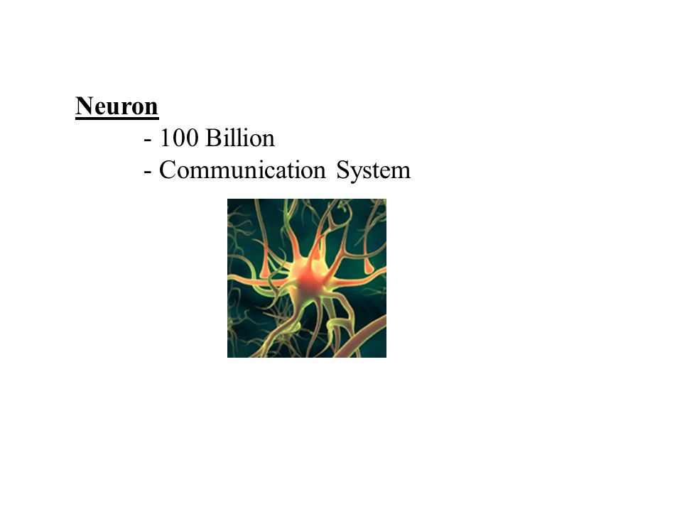 Neuron - 100 Billion - Communication System