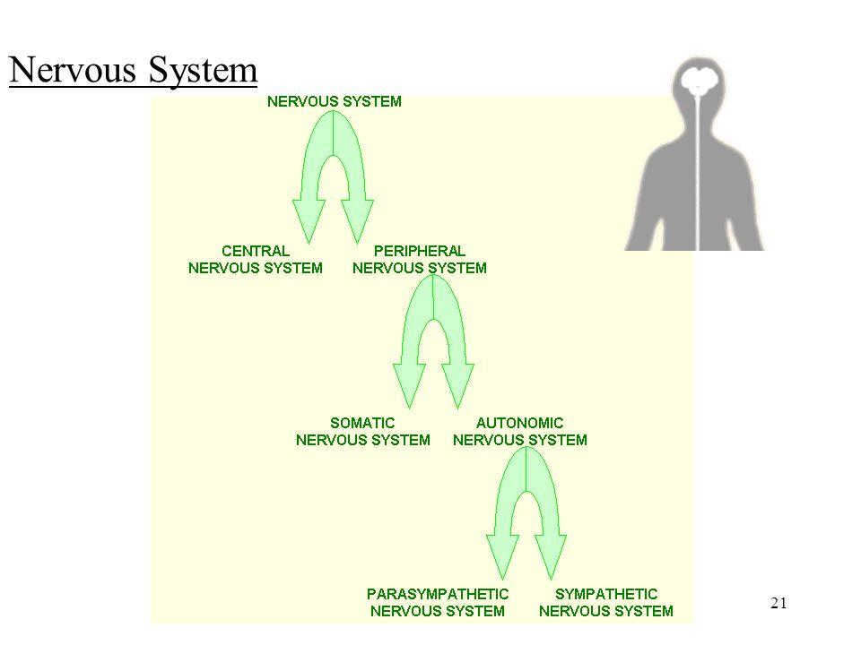 21 Nervous System