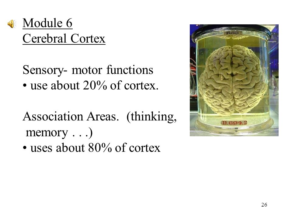 26 Module 6 Cerebral Cortex Sensory- motor functions use about 20% of cortex.