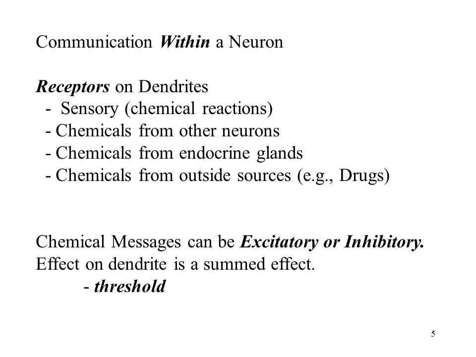 5 Communication Within a Neuron Receptors on Dendrites - Sensory (chemical reactions) - Chemicals from other neurons - Chemicals from endocrine glands - Chemicals from outside sources (e.g., Drugs) Chemical Messages can be Excitatory or Inhibitory.