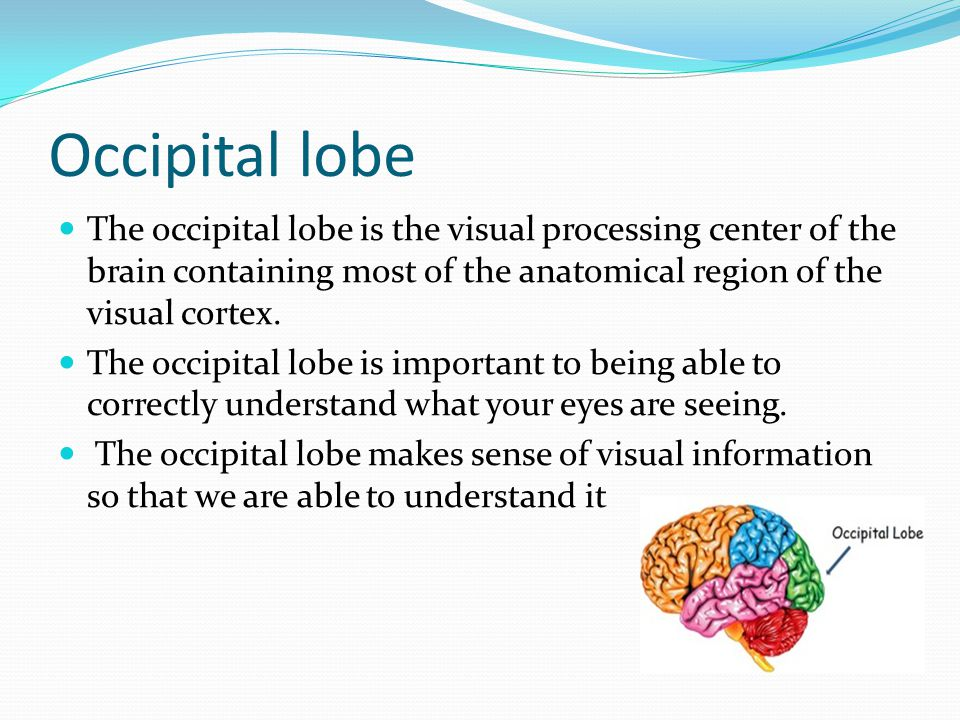 Occipital lobe The occipital lobe is the visual processing center of the brain containing most of the anatomical region of the visual cortex.