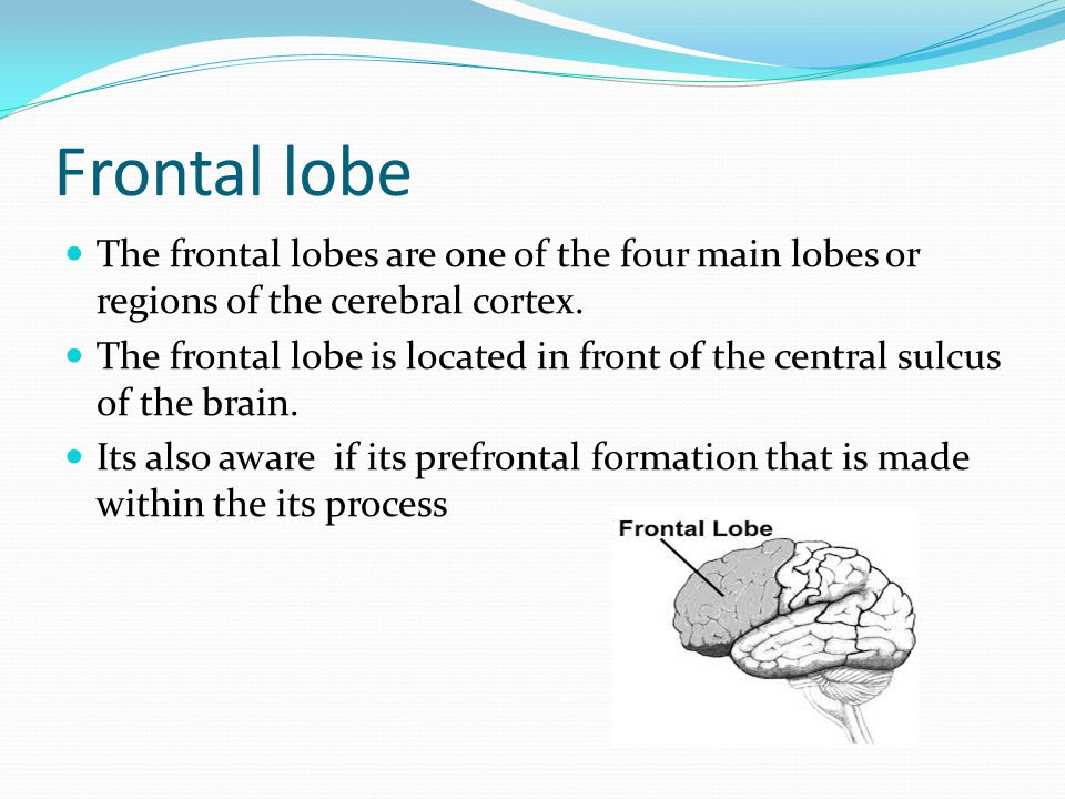 Frontal lobe The frontal lobes are one of the four main lobes or regions of the cerebral cortex.