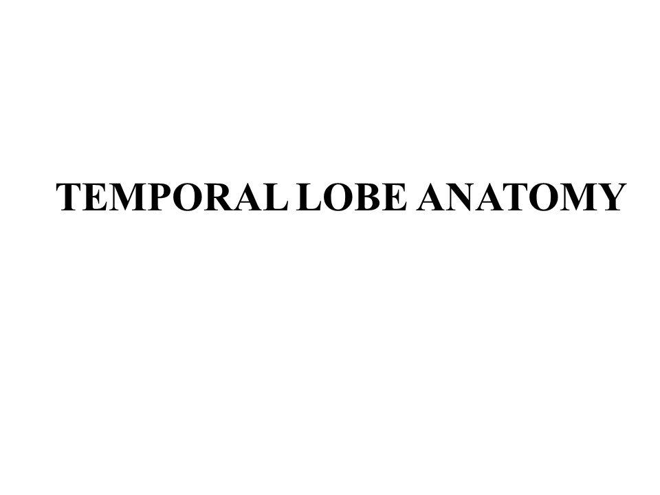 TEMPORAL LOBE ANATOMY