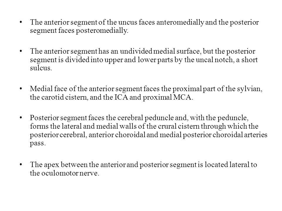 The anterior segment of the uncus faces anteromedially and the posterior segment faces posteromedially. The anterior segment has an undivided medial s