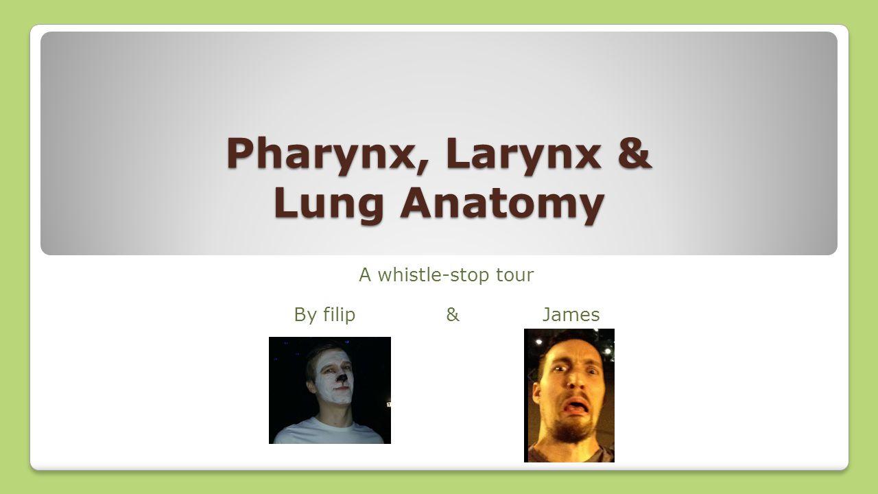 Pharynx, Larynx & Lung Anatomy A whistle-stop tour By filip & James