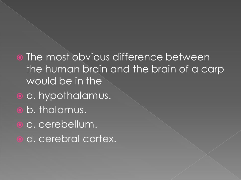  The most obvious difference between the human brain and the brain of a carp would be in the  a. hypothalamus.  b. thalamus.  c. cerebellum.  d.