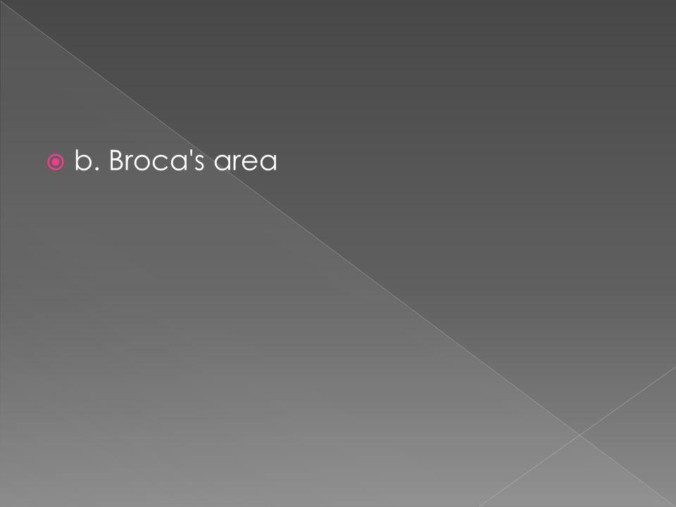  b. Broca's area