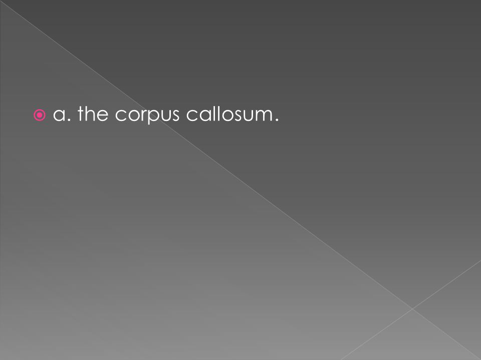  a. the corpus callosum.