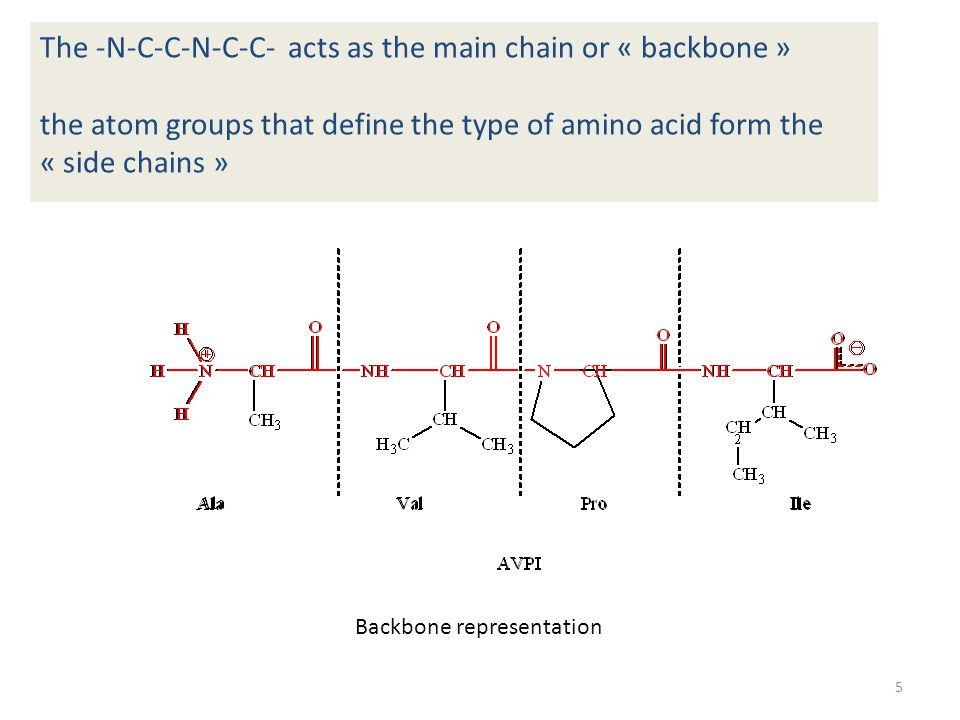 The string of amino acids folds either in the form of a helix, a  -strand or as a non-structured loop (not shown)
