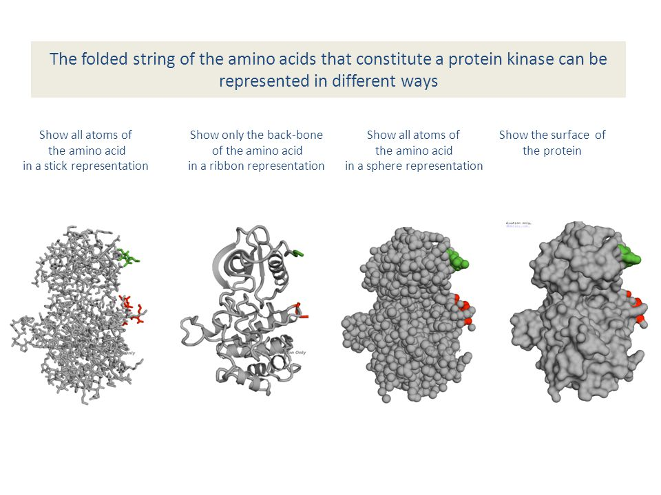 Phosphorylation and dephosphorylation : protein kinases and protein phosphatases