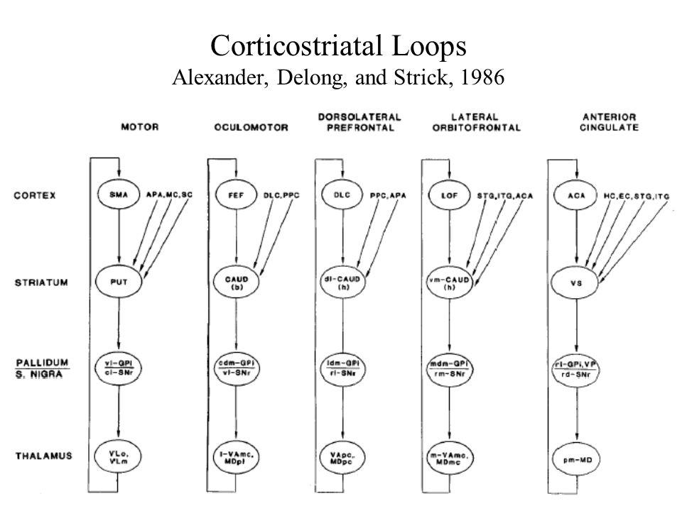 Corticostriatal Loops Alexander, Delong, and Strick, 1986