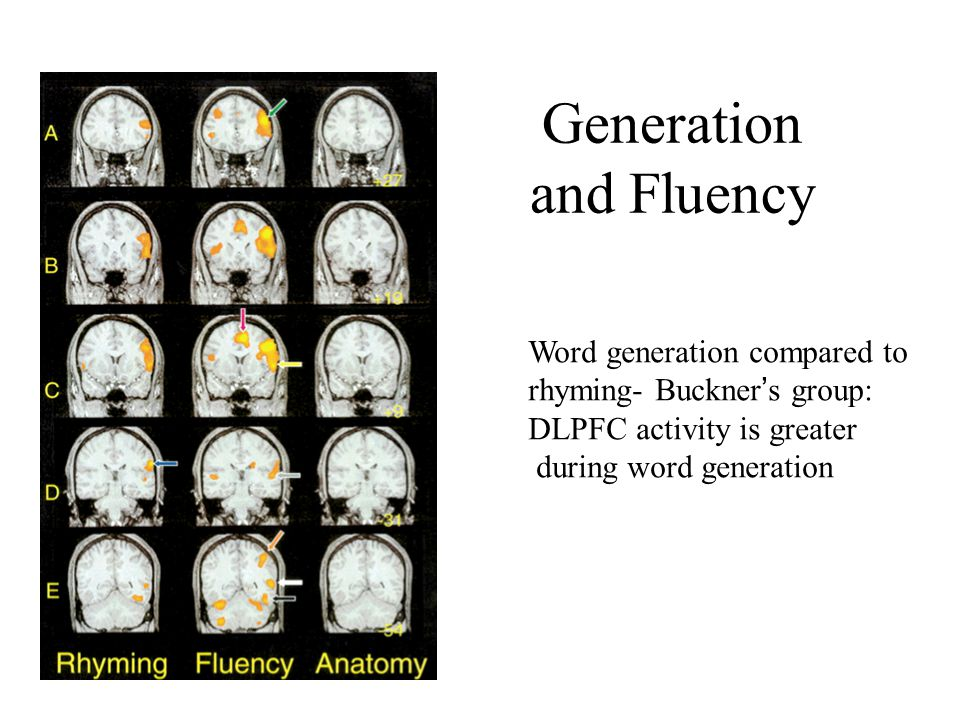 Generation and Fluency Word generation compared to rhyming- Buckner's group: DLPFC activity is greater during word generation