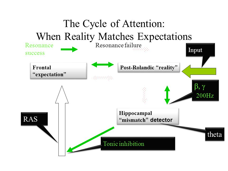 """The Cycle of Attention: When Reality Matches Expectations Frontal """" expectation """" Post-Rolandic """" reality """" Hippocampal """" mismatch """" detector RAS Toni"""