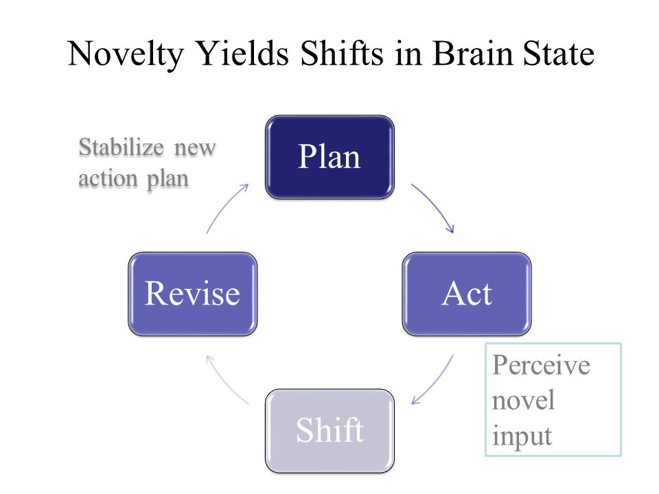 PlanActShiftRevise Perceive novel input Stabilize new action plan Novelty Yields Shifts in Brain State