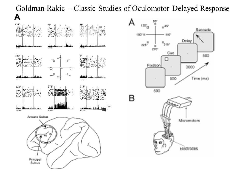 Goldman-Rakic – Classic Studies of Oculomotor Delayed Response