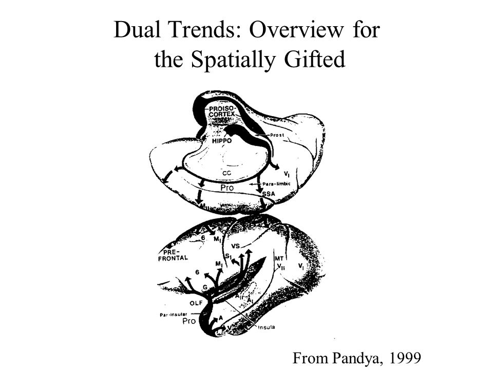 From Pandya, 1999 Dual Trends: Overview for the Spatially Gifted