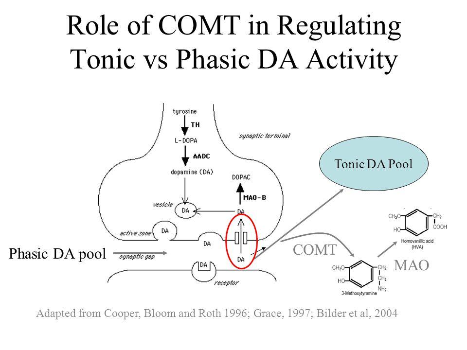 Adapted from Cooper, Bloom and Roth 1996; Grace, 1997; Bilder et al, 2004 COMT Tonic DA Pool MAO Phasic DA pool Role of COMT in Regulating Tonic vs Ph