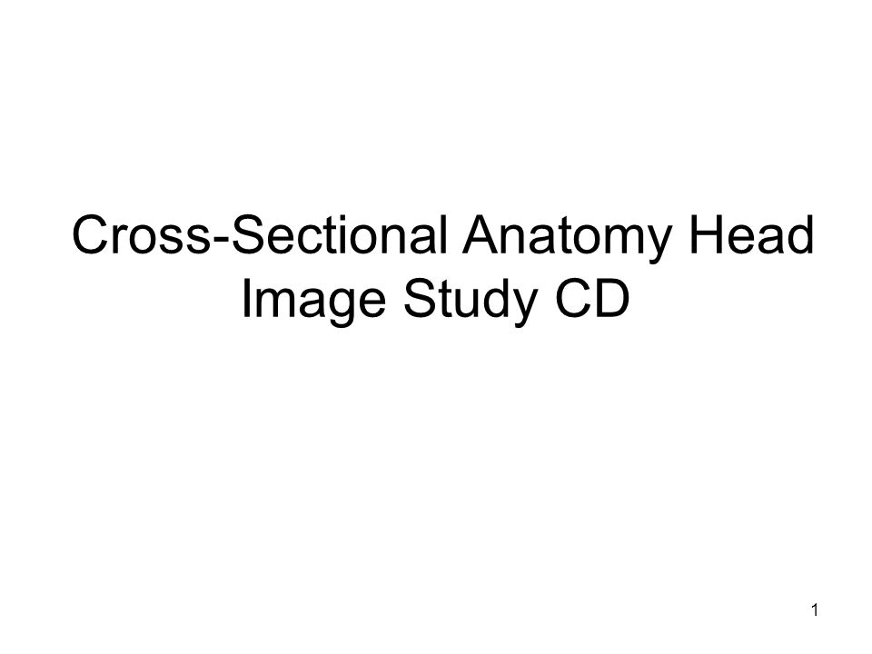 1 Cross-Sectional Anatomy Head Image Study CD